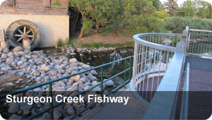 Sturgeon Creek Fishway